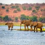 elephants drinking from river