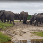 elephants_getting_water