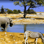 watering_hole_in_the_kalahari_desert
