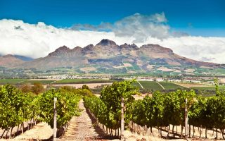Stellenbosch vineyards. South Africa.