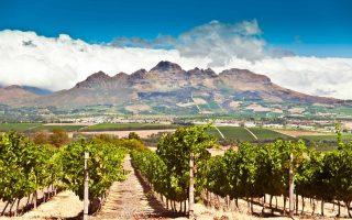 Stellenbosch vineyards. South Africa.